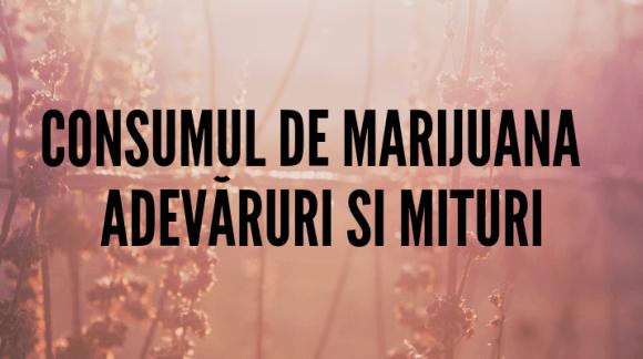 Consumul de marijuana – adevăruri și mituri